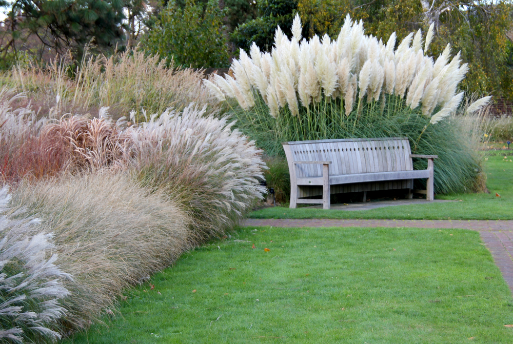 garden design with las vegas landscaping tips ornamental grass with front landscaping from wettec - Garden Design Using Grasses