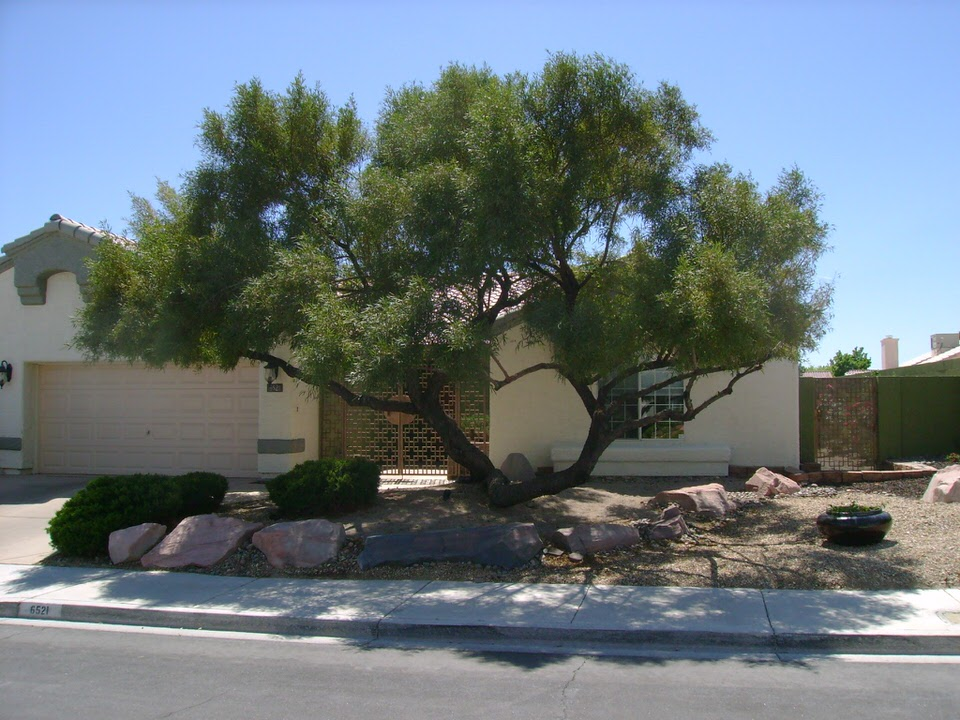 front yard in Las Vegas with rocks and a large tree