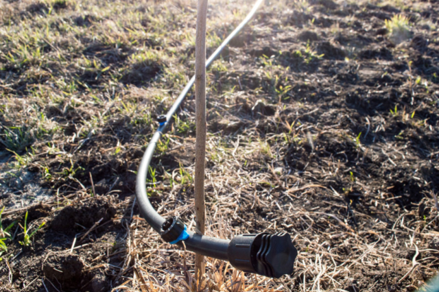 drip irrigation for desert plants