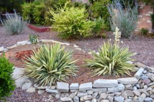 Desert Landscaping Offers Exceptional Aesthetic Options
